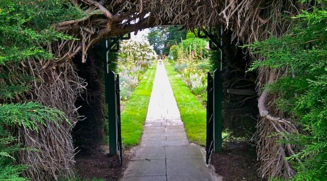 Melba's garden, at last
